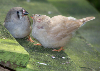 photograph of sparrows feeding